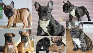 Какой характер собаки
