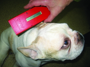 Как делают чипирование собак