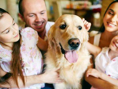 Что такое дегельминтизация собак