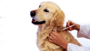 Проведения вакцинации собак
