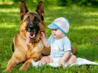 Клички для собак немецких овчарок мальчиков и девочек