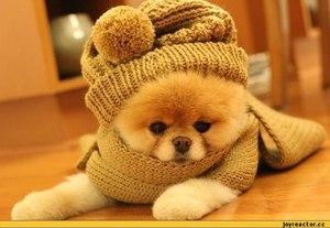 самые милые собачки в мире