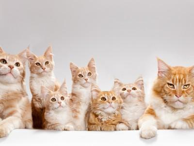 Как лечить мастит у кошки в домашних условиях, симптомы мастита и причины возникновения
