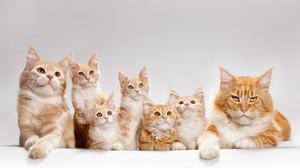 Кошки с котятам