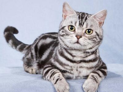 Породы кошек с фотографиями и названиями. Топ 58 пород котов