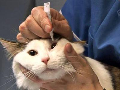 Ринотрахеит у кошек: симптомы вирусного заболевания, способы лечения котов