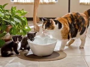 Можно ли предупредить развитие мочекаменной болезни у котов