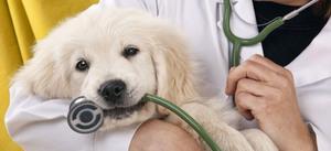 Для чего ксстрировать собак