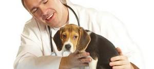 Процесс кастрации собак