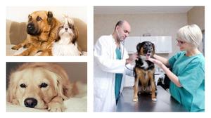 Минусы кастрации  собак