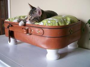 Спальное место для кота из чемодана
