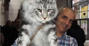 самая большая порода котов в мире