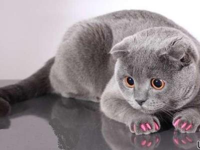 Силиконовые накладки для кошек на когти
