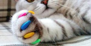 Чем красят ногти кошкам 114