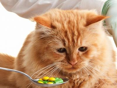 Как давать кошке таблетки от глистов