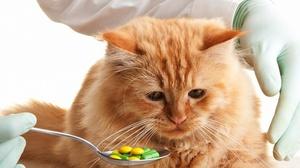 Таблетки от боли коту