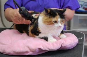 Как подстричь кота самому?