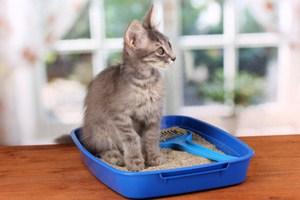 приучение кота к лотку