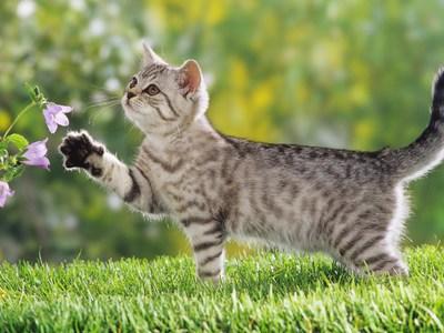 Травматин для кошек вс самое важное о препарате