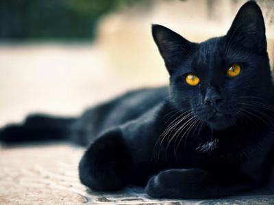 Как назвать котенка мальчика черного