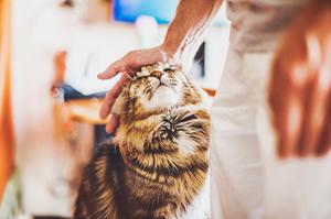 Как отучить кота постоянно кусаться