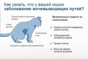 Цистит- мочекаменная болезнь у кота.