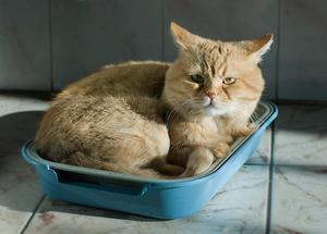 Цистит-болезнь у котёнка