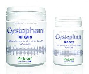 Лечение цистита у кошек