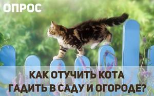 Как приучить кота к месту
