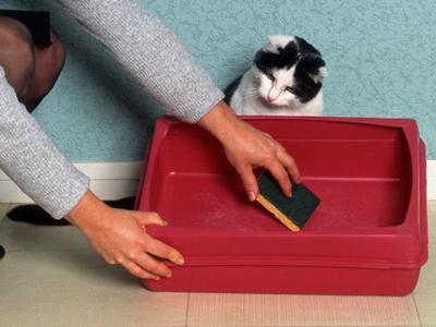 Как отучить кошку гадить