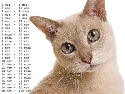 Как узнать сколько лет кошке. Определяем возраст кошки