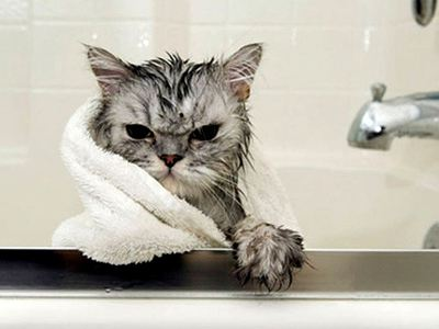 Как мыть кошку - купаем кошку правильно