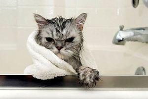 как правильно купать кошку в домашних условиях