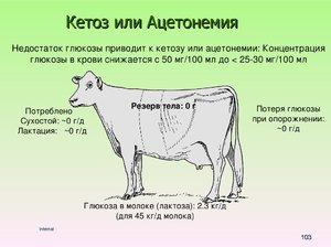 лечение кетоза у коров симптомы и лечение