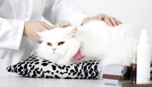 Как ухаживать за кошкой в домашних условиях