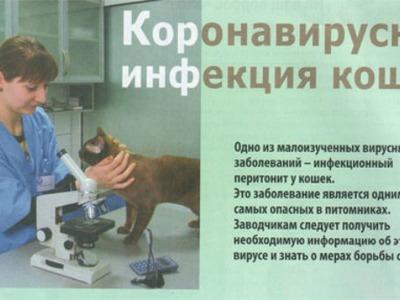 Короновирусная инфекция у кошек гастроэнтерит симптомы и лечение