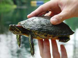 Определение возраста черепах