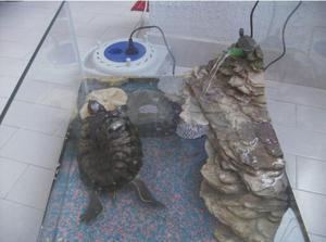 Продолжительность жизни черепахи