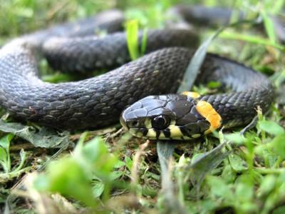 Где живут змеи (в природе, в зоопарке, на дачном участке, в неволе): как называется место