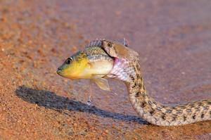 Чем питаются змеи