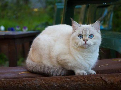 До какого возраста растут коты? Как долго растут кошки?