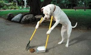 Загрязнения улиц и парков собаками - что делать
