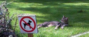 Как гулять с собакой - в парках, общественных местах, на специальных площадках