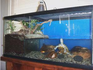Как разводить красноухих черепах