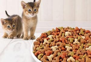Как часто кормить кошек