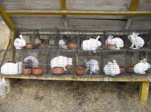 Поилки для кроликов, делаем своими руками автопоилки и ниппельные по 73