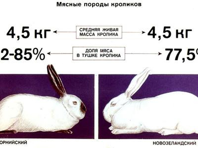 Кролики бройлеры породы