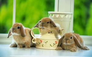 Сколько живут кролики в домашных условиях