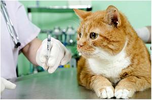 Вакцина кошкам