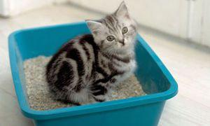 Котенок сидит в лотке